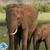Puzzle: Słonie Afrykańskie
